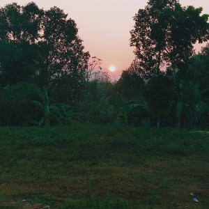 Rinta Roy-Freelancer in ,India